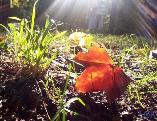 Herbstfarben3ms